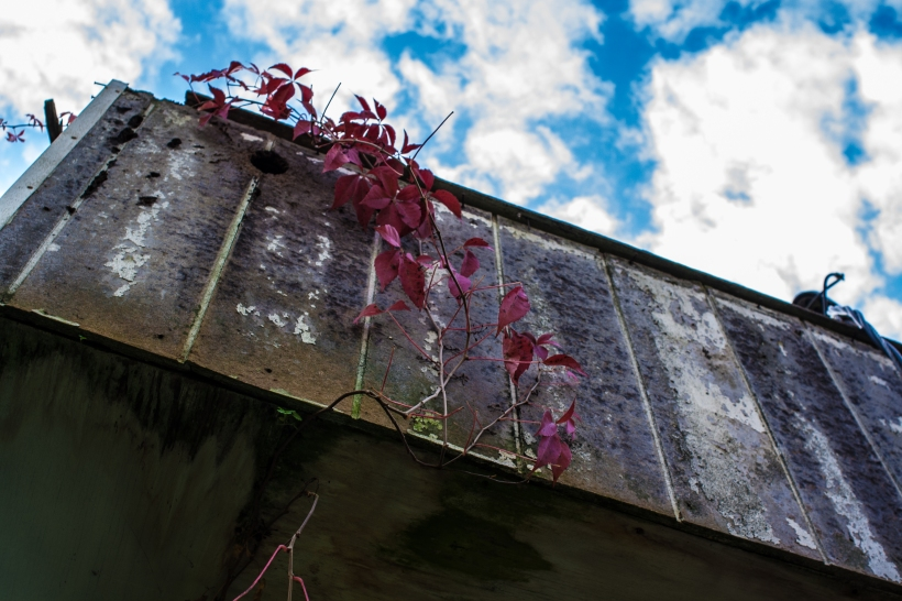 Meg O'Neill. Vines. sky. barriers. tennessee