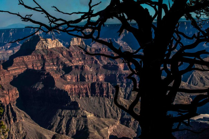 Tree and grand canyon. North Rim. Arizona. Meg O'Neill