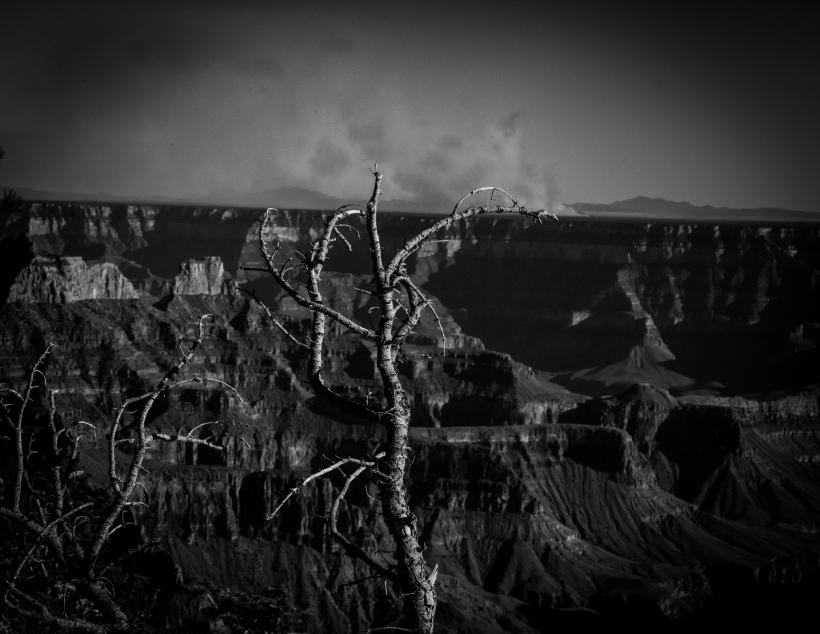 Fire at grand canyon north rim. Arizona Meg O'Neill Black and white